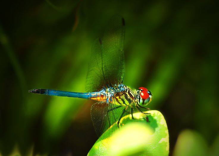 Dragonfly, Insect, Colorful, Nature, Summer