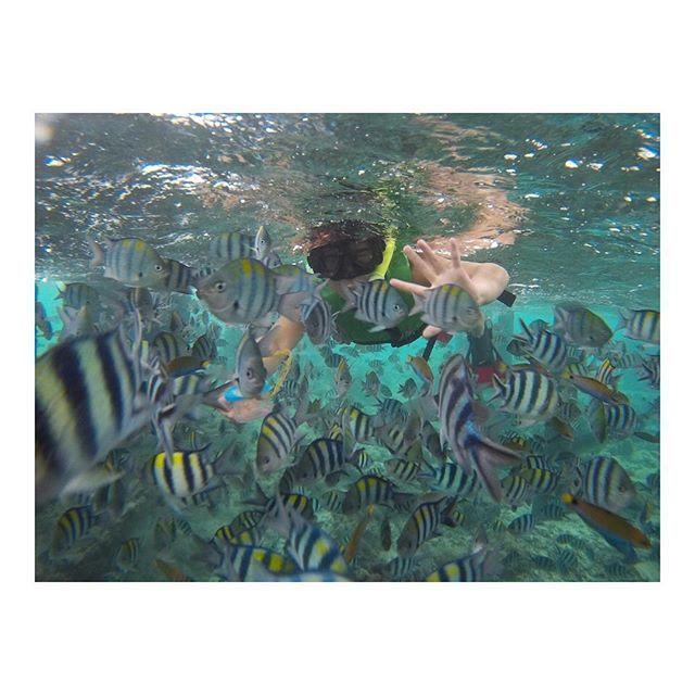 """【yvvcho】さんのInstagramをピンしています。 《2017.01.18 . 大量の魚と戯れた🐠💕 360度さかな😳💓 """"にじいろのさかな""""もいた🐠🌈 . #philippines #cebu #nalusuan #Schnorchel #fish #rainbowfish #ocean #beautiful  #フィリピン #セブ #ナルスアン  #シュノーケル #魚 #海 #にじいろのさかな #🐠 #ネタビ》"""