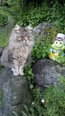 L'immagine può contenere: gatto e spazio all'aperto