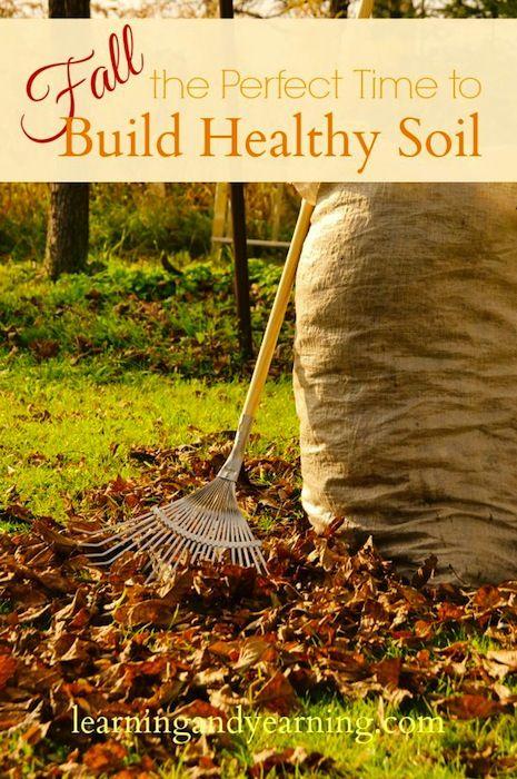 676 best ideas about gardening veggies fruits herbs for Vegetable garden soil