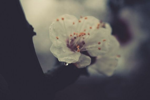 Flowers in the Rain No.01.  Download Nature by tothzsofi on Etsy #photo #art #download #instant #poster #home #decor #flower #floral #rain #inspiration #dark #downloadable #diy