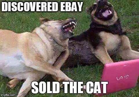 Dog getting rid of cat