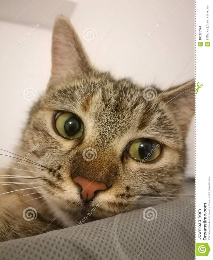 Photo about Cat on white background with green eyes - 105275374