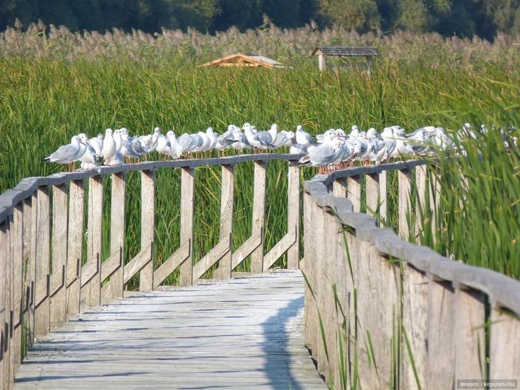 Hungary, Lake Tisza