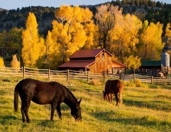 Beautiful fall scene colorful trees barn and horses - Pics of fall scenes ...