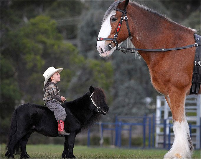 Colt Bullen on Prancer looks up to Hercules the Clydesdale, they start young