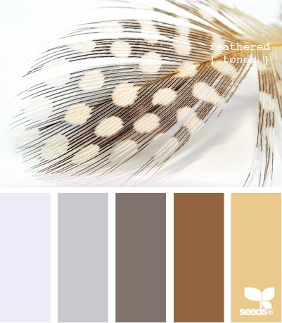 feathered tonesColors Pallets, Colors Tone, Design Seeds, Bedrooms Colors, Feathers Tone, Living Room, Colors Palettes, Master Bedrooms, Colors Schemes