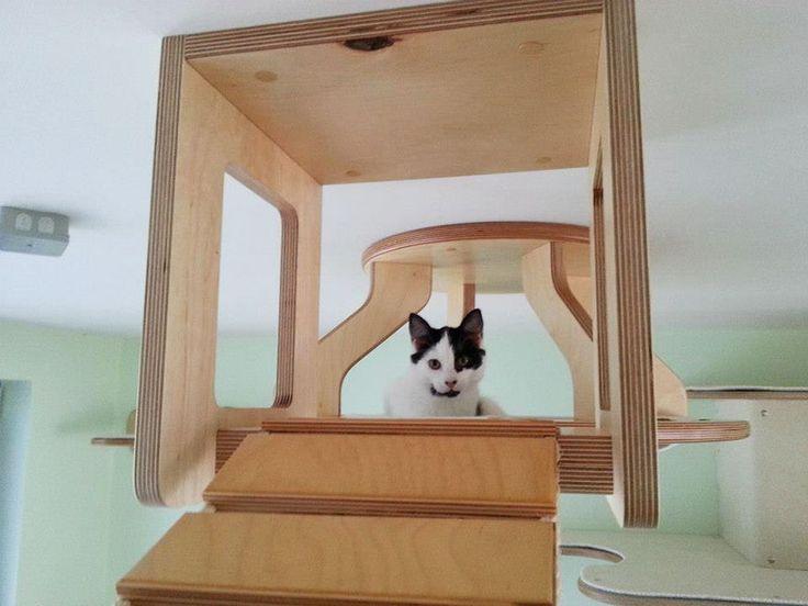 une piece en aire de jeux pour chat 7   Transformer une pièce en aire de jeux pour chat   photo meuble jeu image Goldtatze chat aire de