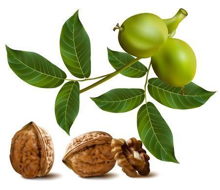 Pajzsmirigy - zöld dió recept