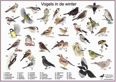 Vogels in de winter zoekkaart