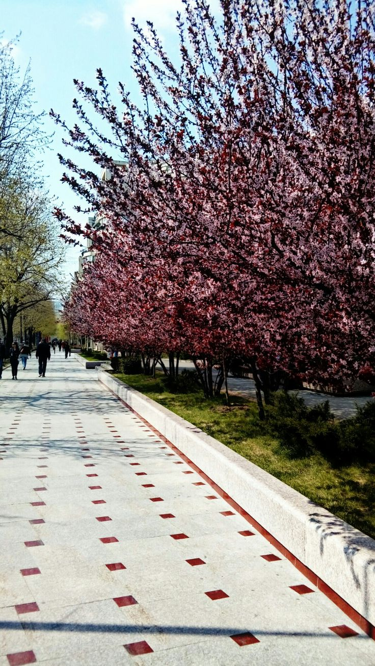 Spring in Bucharest. Pink invasion. All just flowers and green.