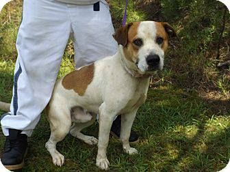 """13D-1385 (6/20)'s Info...MESSAGE FROM RONDA ABOUT """"JACK"""": I was on the phone with one of the volunteers and she just about burst out into tears over Jack ,, she say's he's the MOST LOVING dog she's ever seen. He's pressing against the bars,, Begging for any second of human contact and companionship.   I found out Jack's story,,  Jack had an owner that just didn't care about him ,, threw him in the yard and never paid attention to him ..."""