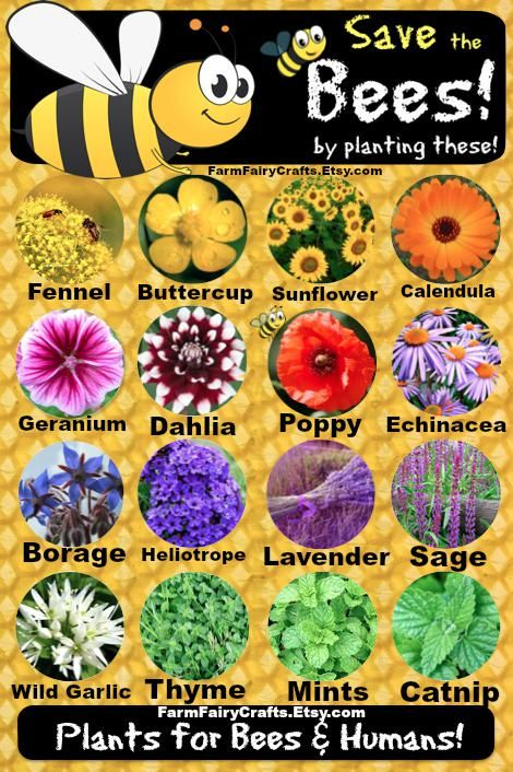 Save the #Bees! Plant These & More to Attract Bees... http://www.fix.com/blog/bring-back-the-bees/…     #SaveBees