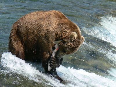 Salmon Fishing in Alaska http://www.zimbio.com/Newfoundland/articles/segSv3jNb6L/Salmon+Fishing+Boating+Holidays+Canada