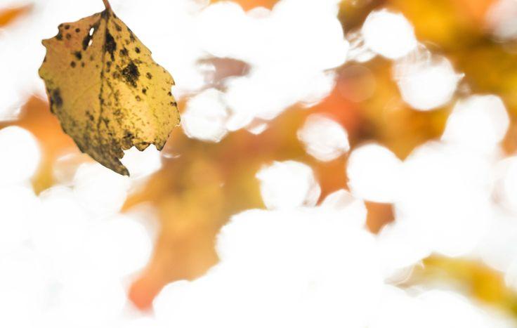 Autumn, 2016 @Mirja Paljakka photography