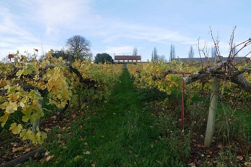Winery Weekend at Three Choirs Vineyard in Gloucestershire