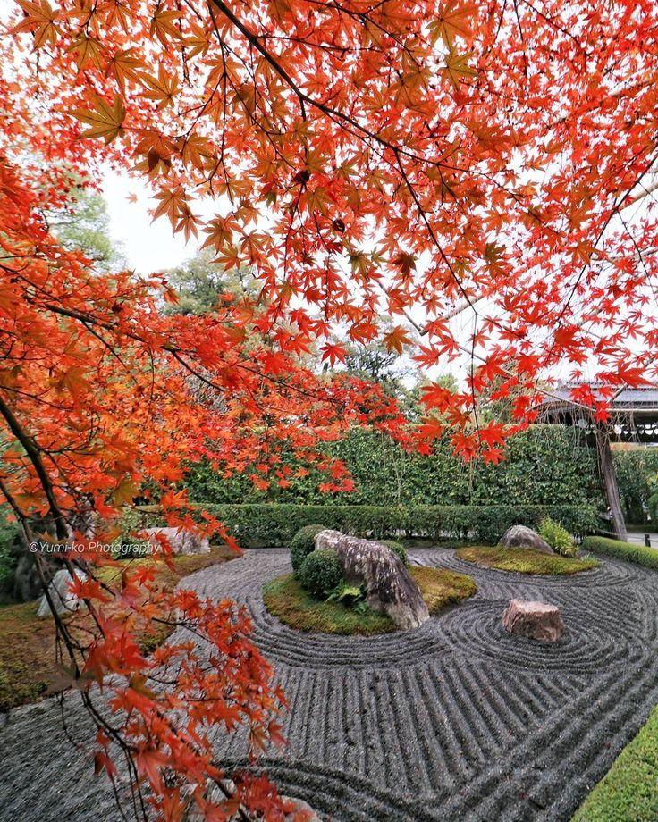 妙心寺 退蔵院🍁 . 桜の時季は人、人、人な退蔵院ですが、紅葉シーズンはまだ穴場😁💓ゆっくり静かに楽しめました🎶(先週末撮影📷) . この「陰の庭」(珍しい黒砂の枯山水)が大好きで、秋もよく訪れるんですが、ここは桜同様、紅葉も他より遅めに見頃になります。でも、今年は紅葉が早かったお陰でまぁまぁ良いタイミングで拝めたかな😆🎶 . このアングルの場所は柵があって入れないため、腕を伸ばして撮影しました😊 . Location: Kyoto, Japan . #妙心寺退蔵院 #妙心寺 #塔頭 #退蔵院 #紅葉 #陰の庭 #枯山水 #日本庭園 #禅寺 #寺社仏閣 #そうだ京都行こう #日本に京都があってよかった #京都 #Kyoto #Japanesegarden . #yumikoの京さんぽ