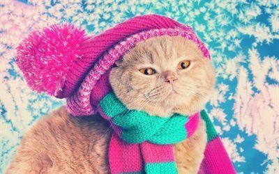 Scarica sfondi cappello in maglia, gatto, sciarpa