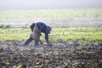 Peasant sowing in a day of winter, landscape of closed fog..