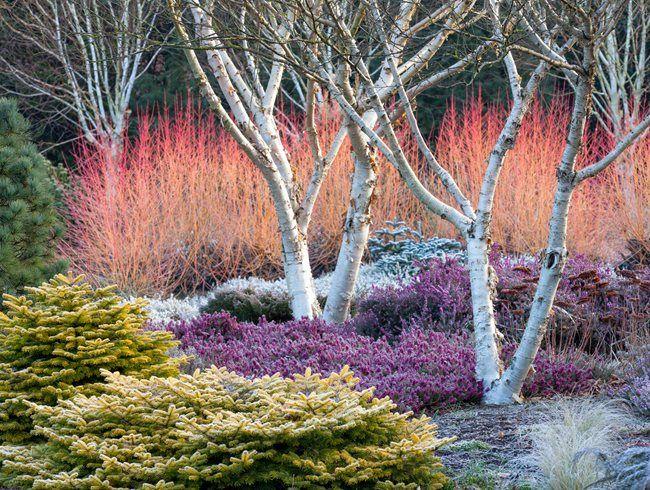 2018 Garden Design Tips To Consider Garden And Outdoor Gardendesign Gardendesign2018 Topgardendesign Winter Garden Garden Design Magazine Winter Plants
