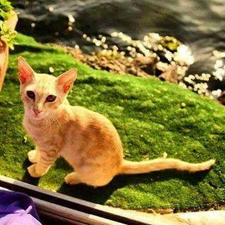 #kedidelileri #kedi #catstagram #catlover #pisi #turkeycat #sarman #tekir #kity #kediseverler #catlovers #kediasiklari #blackcat #karakedi #sokakkedisi #streetcat #streetcats #cat #cats #kediler #kedileralemi #kedisizhayatcokbayat #kedisizolmaz #whitecat #whitecats
