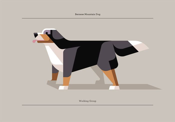 Cute illustrated Bernese mountain dog done by Josh Brill in Portland, Maine.