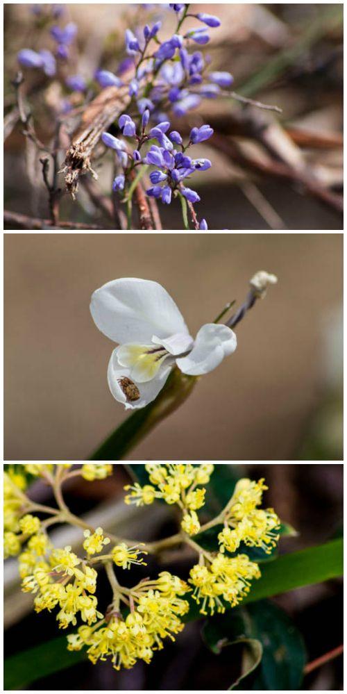 Henry Somerset #Orchid Conservation Area, Railton Road, Latrobe #Tasmania Photos by Benita Bell, Daydream Photography, article for think-tasmania.com