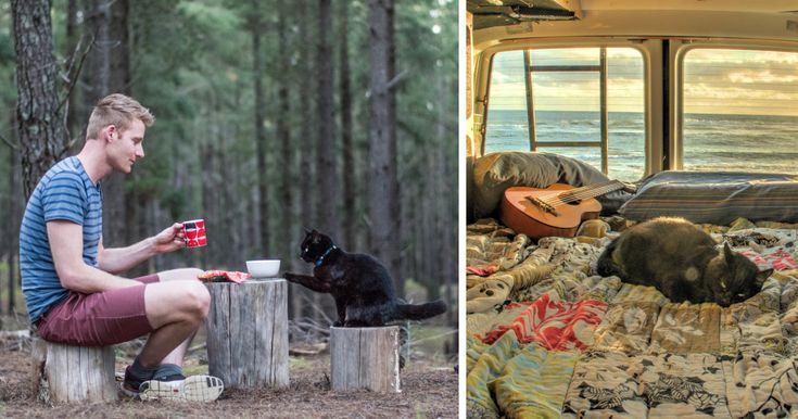 2,5 Years Ago, I Quit My Job And Sold Everything To Travel With My Cat Willow In A Campervan | Bored Panda