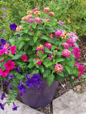 All this would do great on hot back deck  Lantana, vinca, petunia