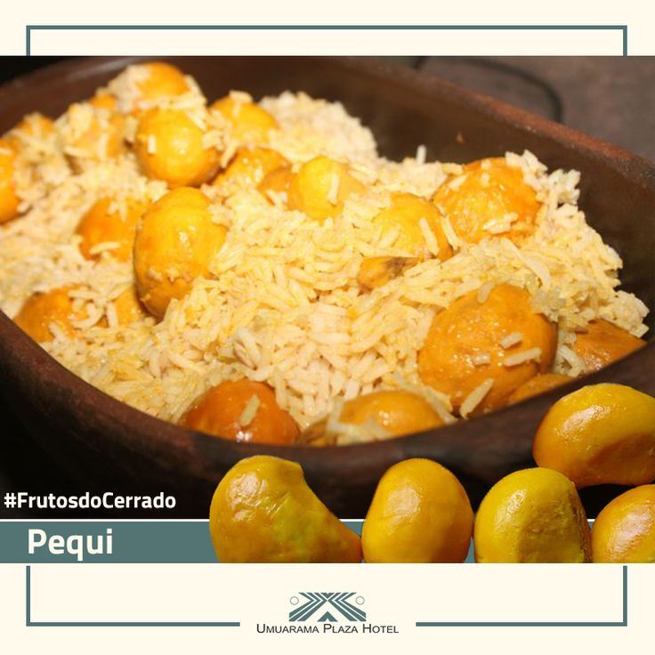O Pequi é um fruto típico do Cerrado, seu tamanho é aproximado a uma maçã e possui casca verde. No seu interior, existe um caroço revestido por uma polpa comestível macia e amarela. Embaixo da polpa há uma camada de espinhos muito finos, por isso ao roer o pequi cozido, é preciso ter cuidado. Por baixo dos espinhos há uma amêndoa macia e muito saborosa. Muito utilizado na culinária regional em deliciosos pratos como o arroz com pequi, ou ainda como tempero, em conserva. #FrutosdoCerrado