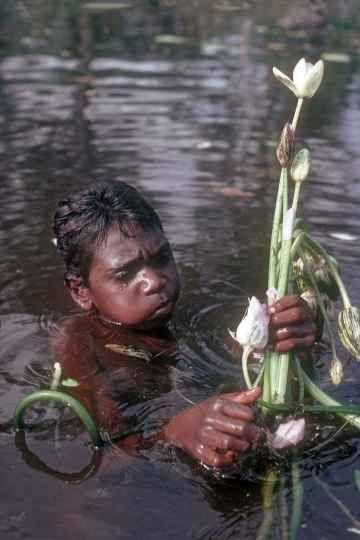 Waterlily - coplelcting http://ozoutback.com.au/Australia/bushtucker/slides/1983111604.html