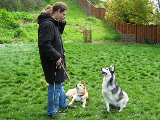 Operant Conditioning - How to Modify a Dog's Behavior