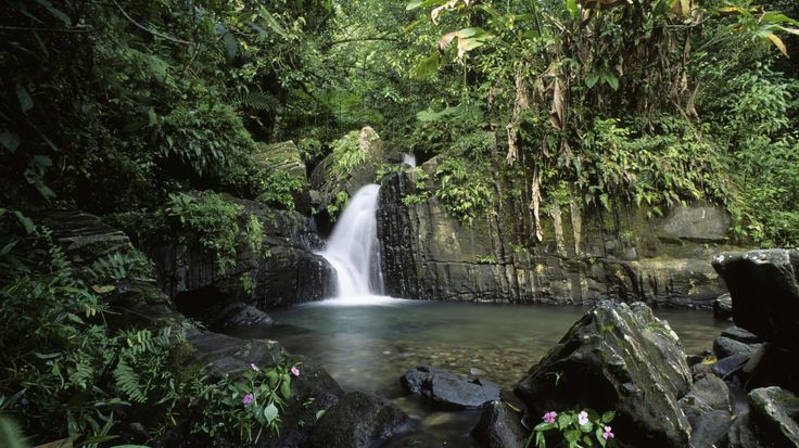 El Yunque National Forest, Puerto Rico  - CountryLiving.com