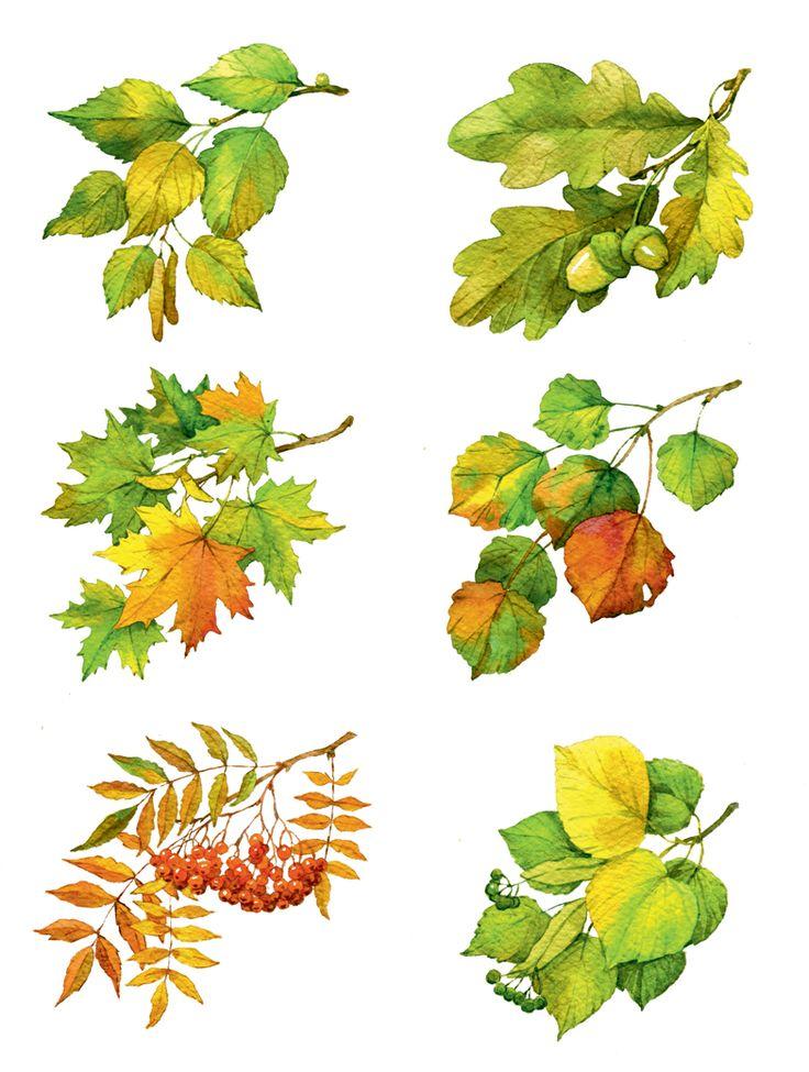 сафин картинки веток разных деревьев нынче особо