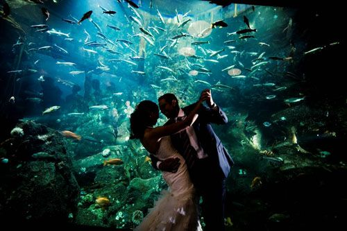Seattle Aquarium Wedding Venue