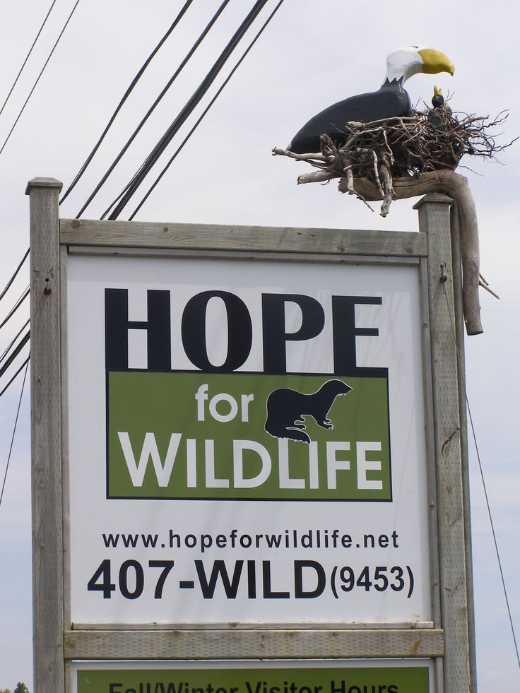 A tour of the Hope for Wildlife Society facility in lovely Seaforth Nova Scotia