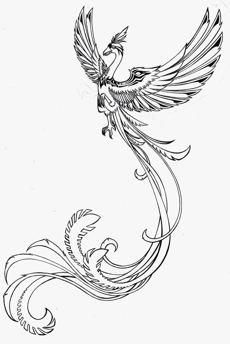 Tattoo designs coloring book - Flames And Phoenix Tattoos Drawing Tattoes Idea 2015 2016