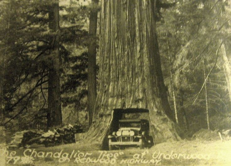 VINTAGE RPPC OLD CAR DRIVE THROUGH CHANDELIER TREE UNDERWOOD PARK ...