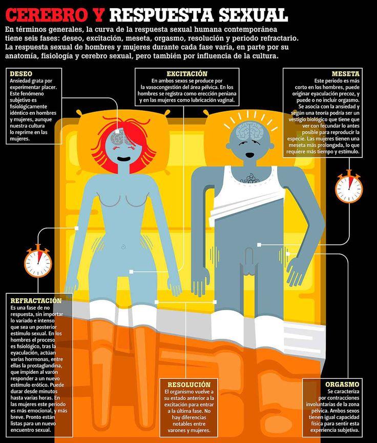 El cerebro y la respuesta sexual (2) - Investigación y Desarrollo