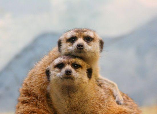 10 Cute Animal Couples (PHOTOS)
