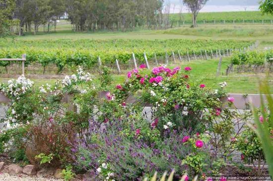 Misty Glen Wines: View of the vineyard