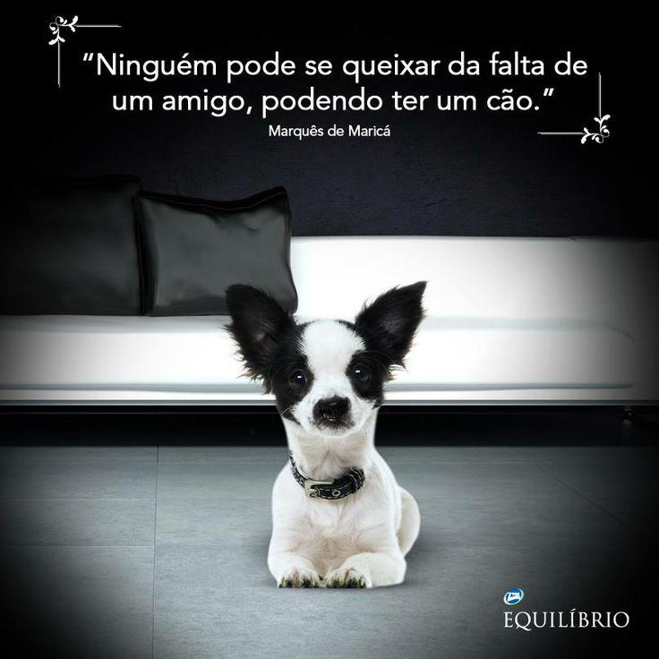 Ter um melhor amigo é só questão de escolha! ;)