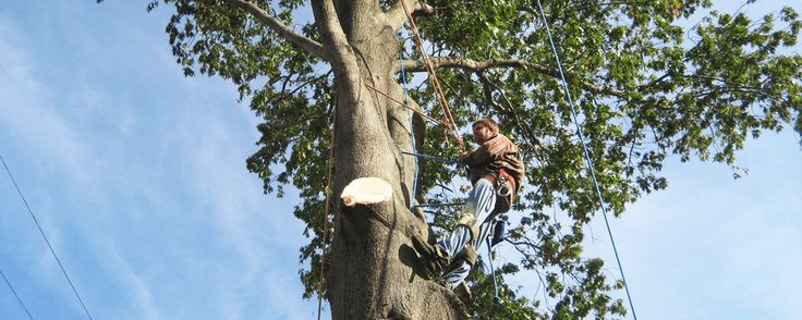 How Much Does Tree Removal Cost