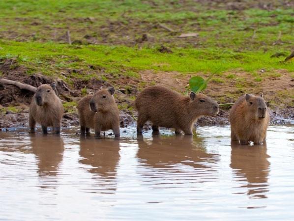 Pantanal                                                                                                                                                                                 Mais