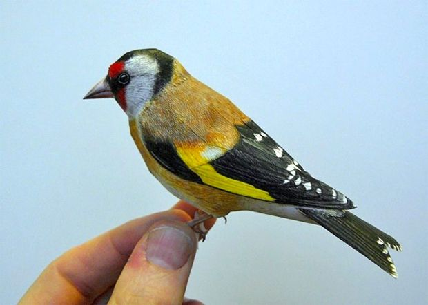 Os fantásticos pássaros realistas de papel criados por Johan Scherft