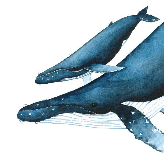 Buckelwale von Nathalie Ouederni