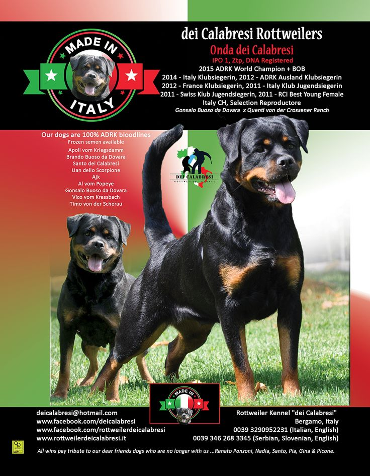 "Rottweiler Kennel ""dei Calabresi"" Bergamo, Italy  0039 3290952231 (Italian, English) 0039 346 268 3345 (Serbian, Slovenian, English)  deicalabresi@hotmail.com www.facebook.com/deicalabresi www.facebook.com/rottweilerdeicalabresi www.rottweilerdeicalabresi.it"