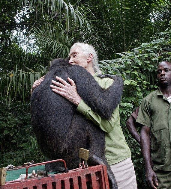 Jane Goodall Quotes: 278 Best Images About :: JANE GOODALL