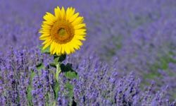 The sunflower is one of the obvious choices for summer, but what are some other popular plants that thrive in warm weather?