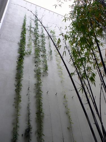 Bondi Green Facade